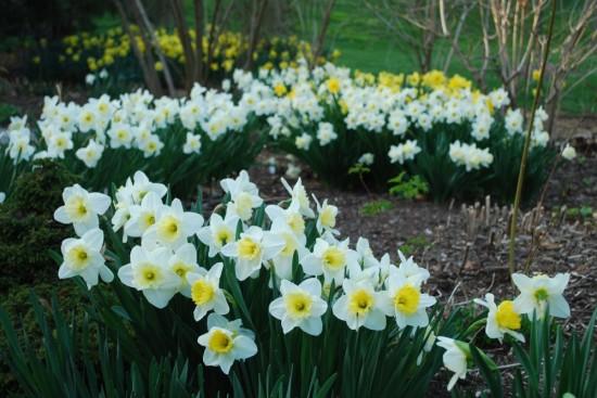 White Garden John Bartram Kirk R. Brown