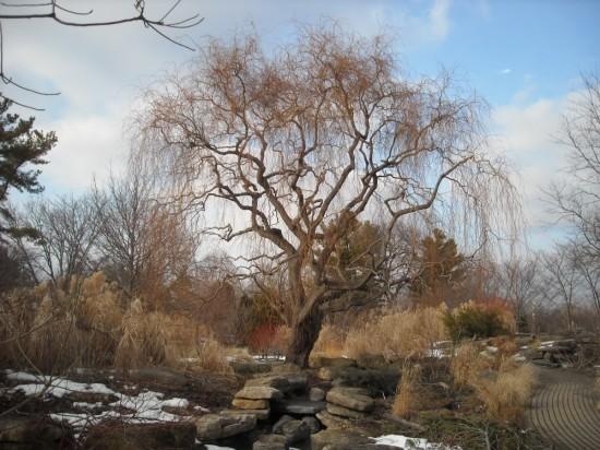 John Bartram Kirk R.Brown Olbrich Botanic Garden Madison WI