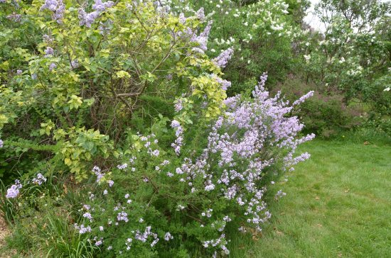 Rutgers Garden, Kirk R. Brown, John Bartram, Lilac Collection, Holly House
