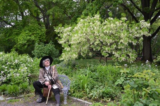 John Bartram, Chionanthus virginicus, Awbury Arboretum, Scattergood Foundation