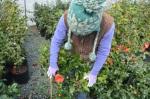 Raleigh, North Carolina: Horticultural HotSpot!